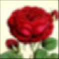 rose_new50mm_5mmPinHole_128x128_5x5